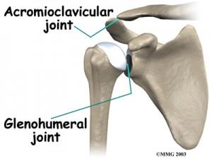 shoulder_anatomy_bones02